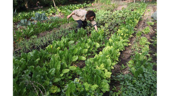 Agriculture based Medicine