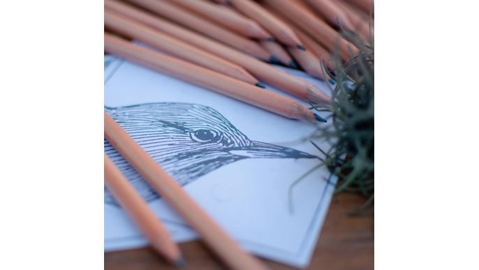 Nests, the ilustrated book