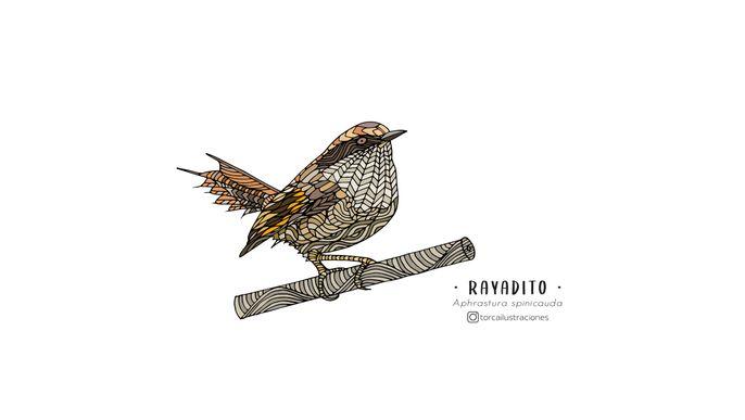 Libro para colorear Aves