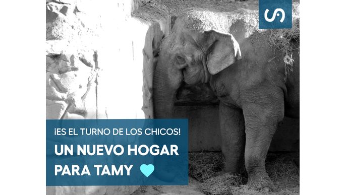 Ven Tamy