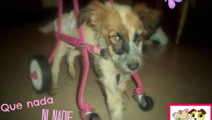 X los Animales Discapacitados