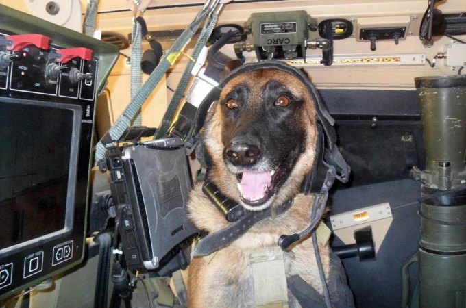 Ryky the military dog