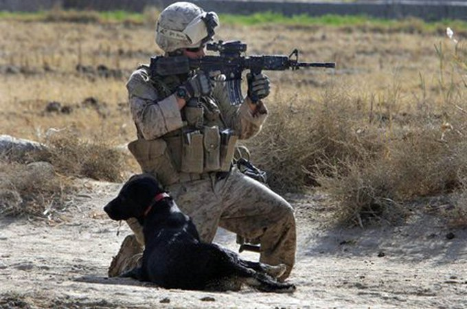 Cena military dog