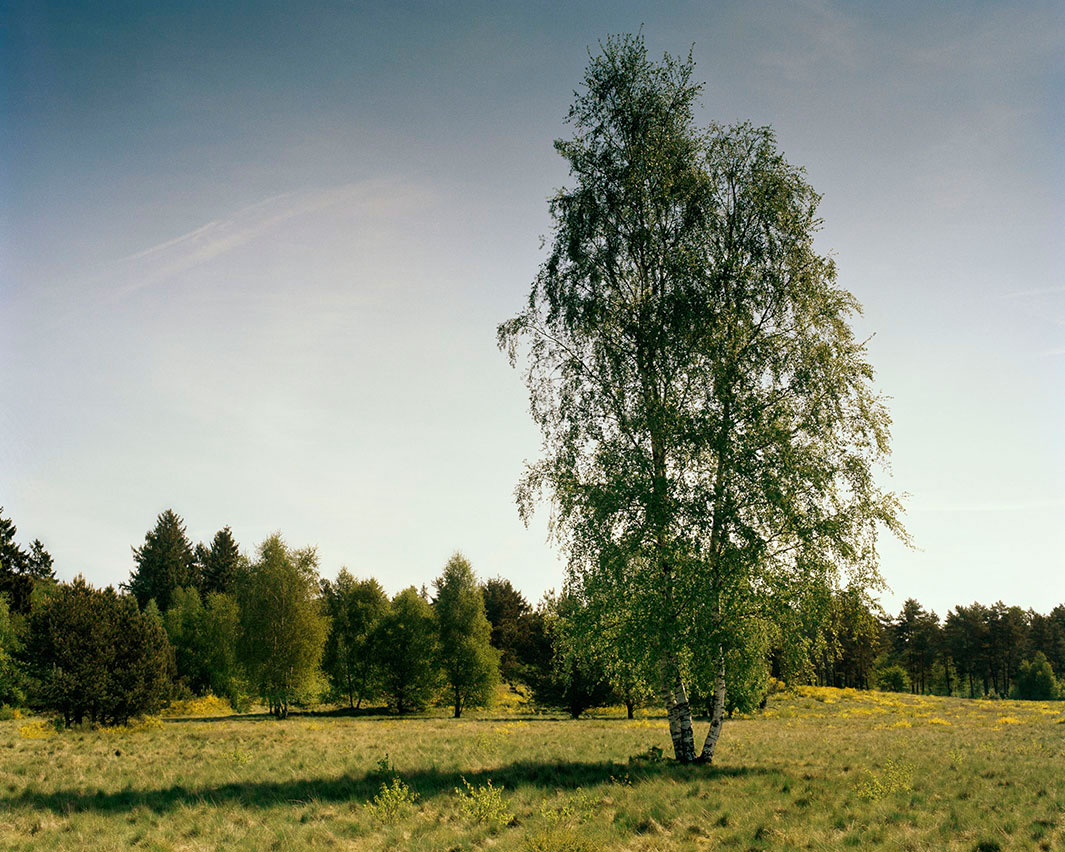 Answer:  Sniper under the left  side of the tree in the foreground. (photo: Simon Menner, Slate.com)
