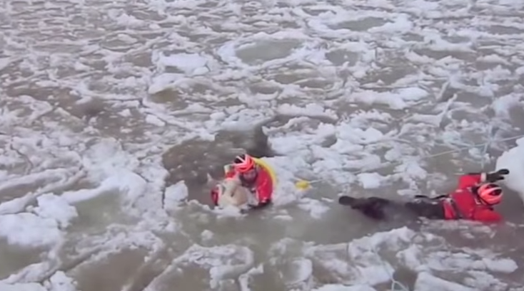 USCG saves dog