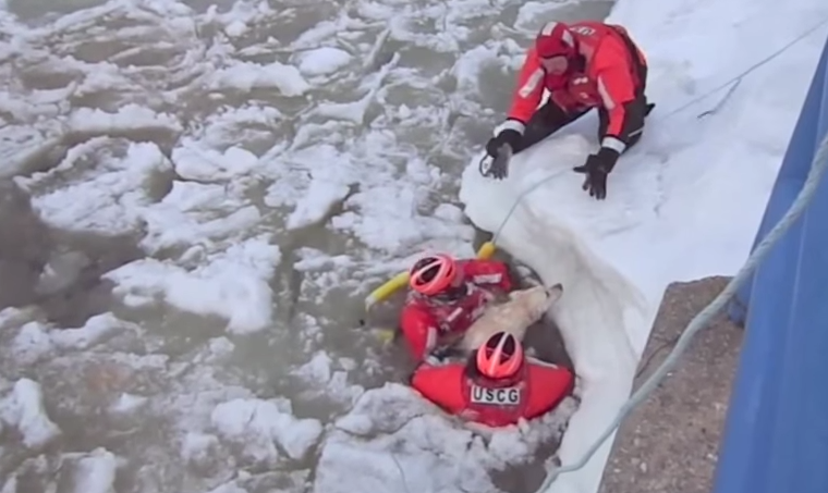 USCG pulls dog out of water