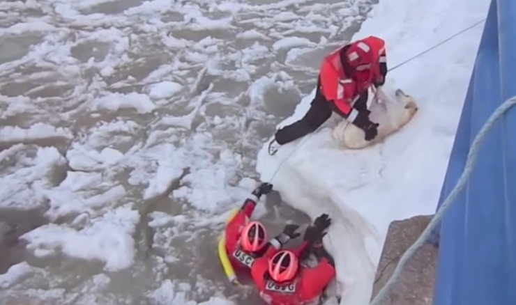 Michigan Coast Guard saves dog
