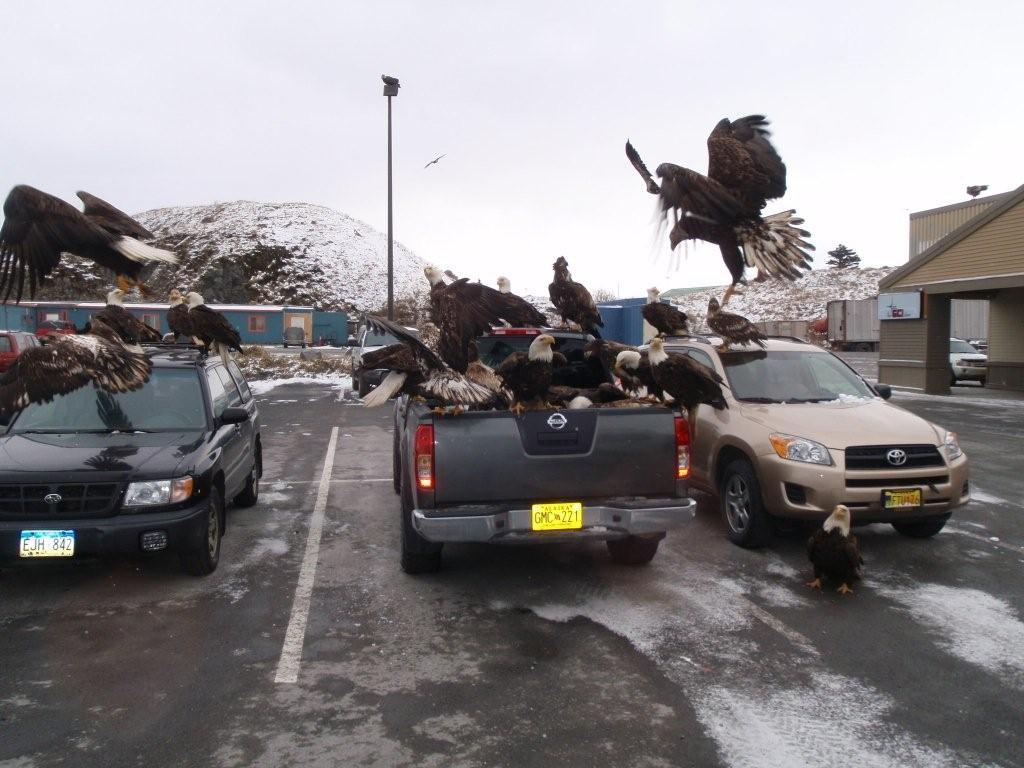 eagles on car