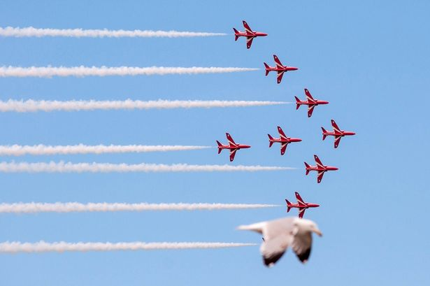 red arrows seagulls