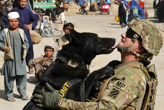 Photo Of Military Dogs - The SITREP Military Blog