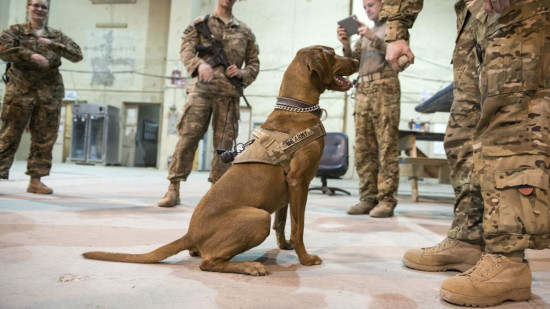 War Dog Photo - The SITREP Military Blog