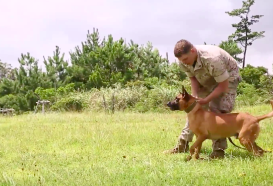 WITNESS MILITARY WORKING DOGS TRAINED BY MARINES - THE SITREP MILITARY BLOG
