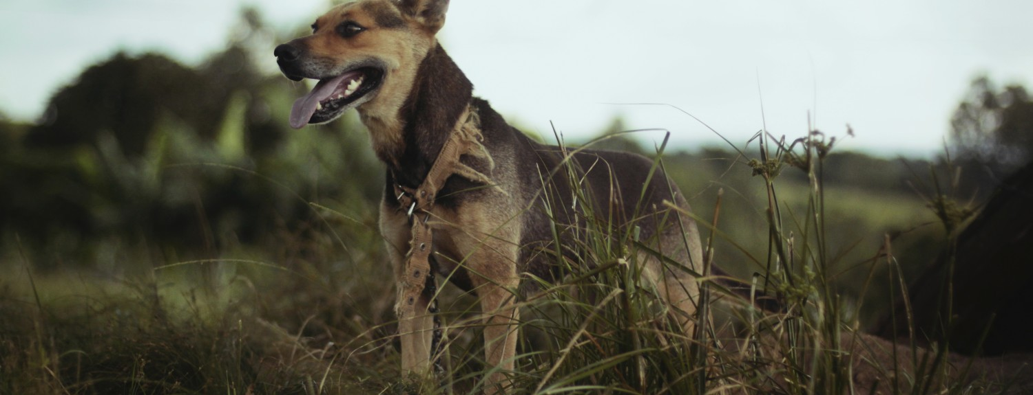 Camping Dog Photo - The SITREP Military Blog