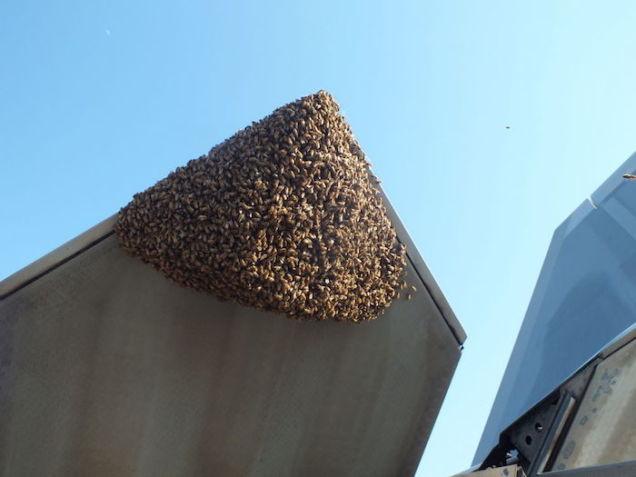 raptor bees photo 1