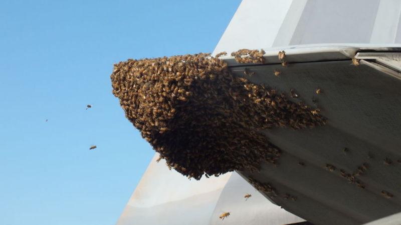 raptor bees 3