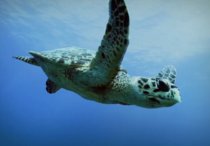 sea-turtle-for-force-blue-photo-for-post