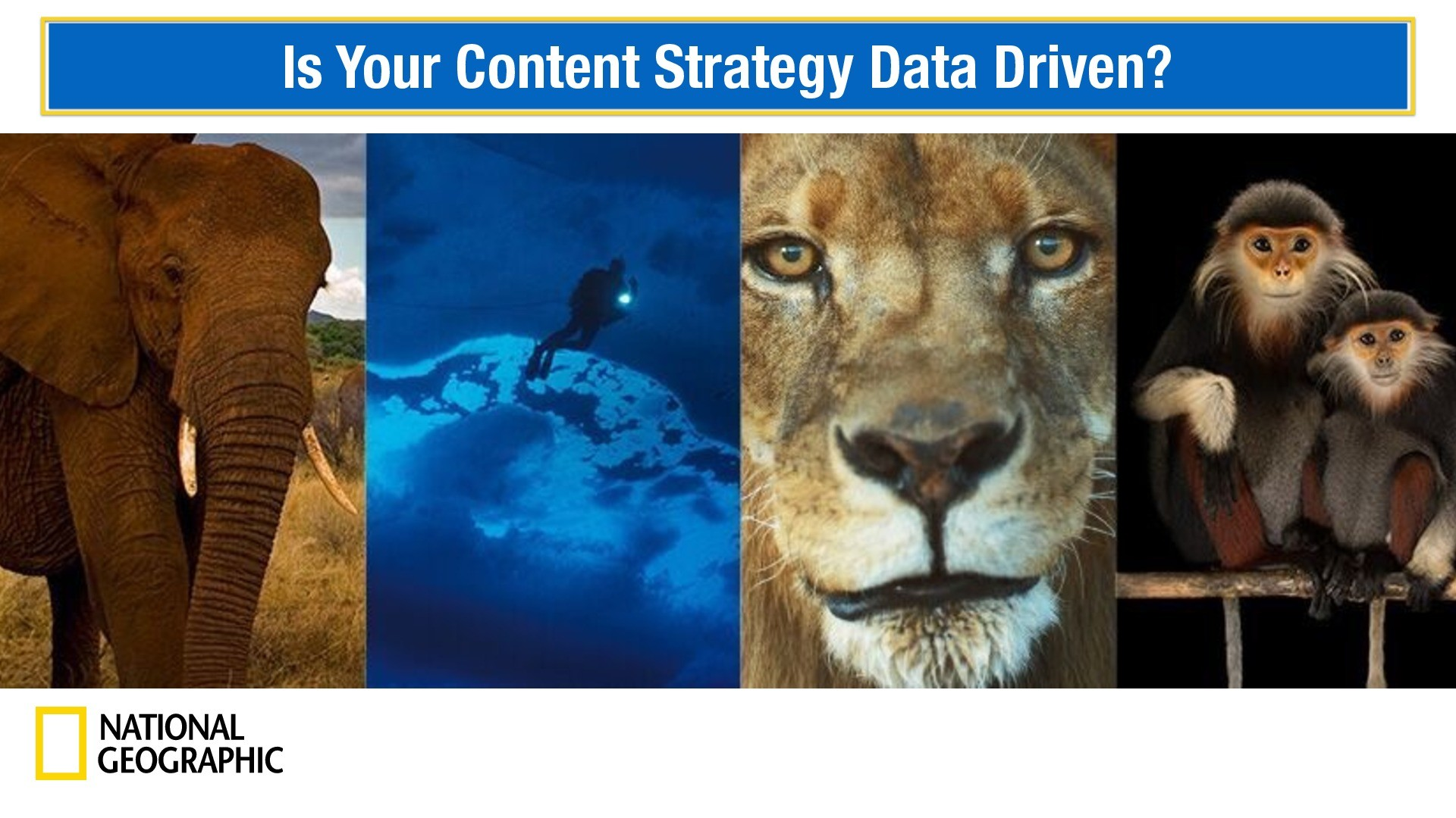 Is Your Content Strategy Data-Driven? presentation image