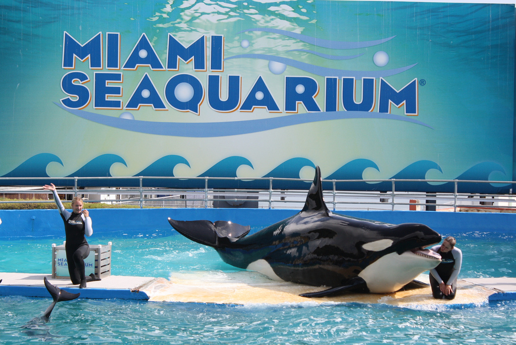 """Miami Seaquarium"" by Leonardo Dasilva via Flickr Creative Commons"