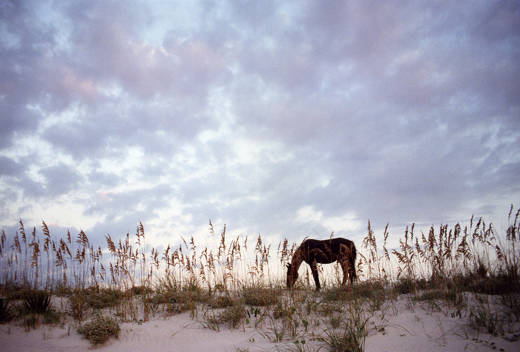 """2000.09 Cumberland Is. Horse 2"" by Anoldent via Flickr Creative Commons"