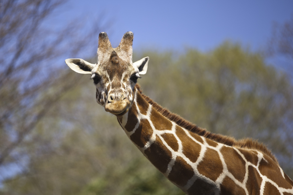 """20110417-758-MarylandZoo"" by Terry Robinson via Flickr Creative Commons"