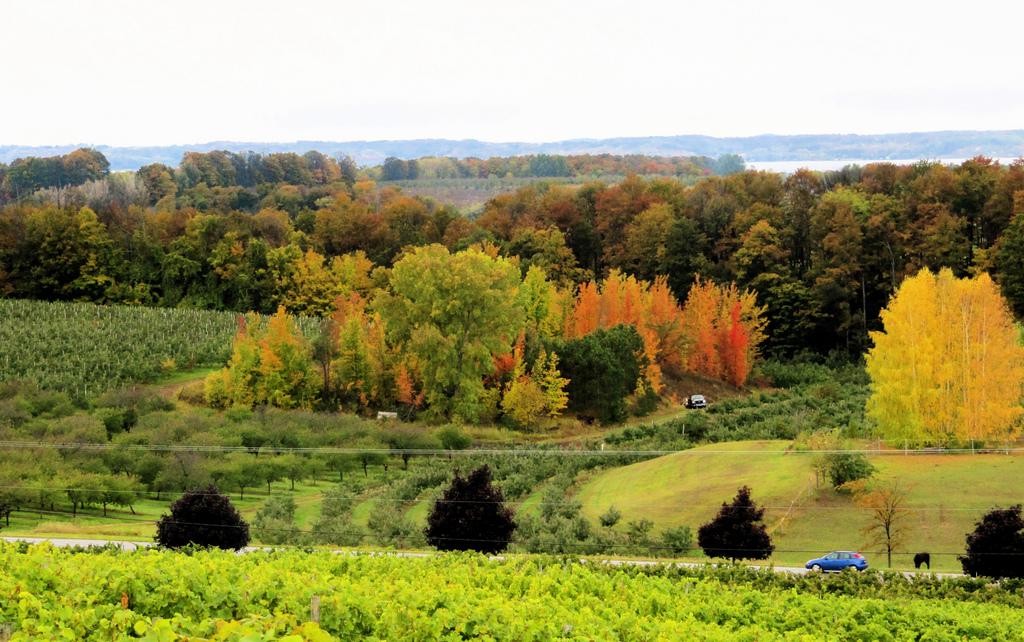 """Wine Country"" by Rachel Kramer via Flickr Creative Commons"