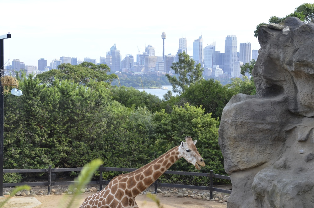 Giraffes have the best view, hot just for their height | Photo Credit: Cailin O'Neil of TravelYourself.ca