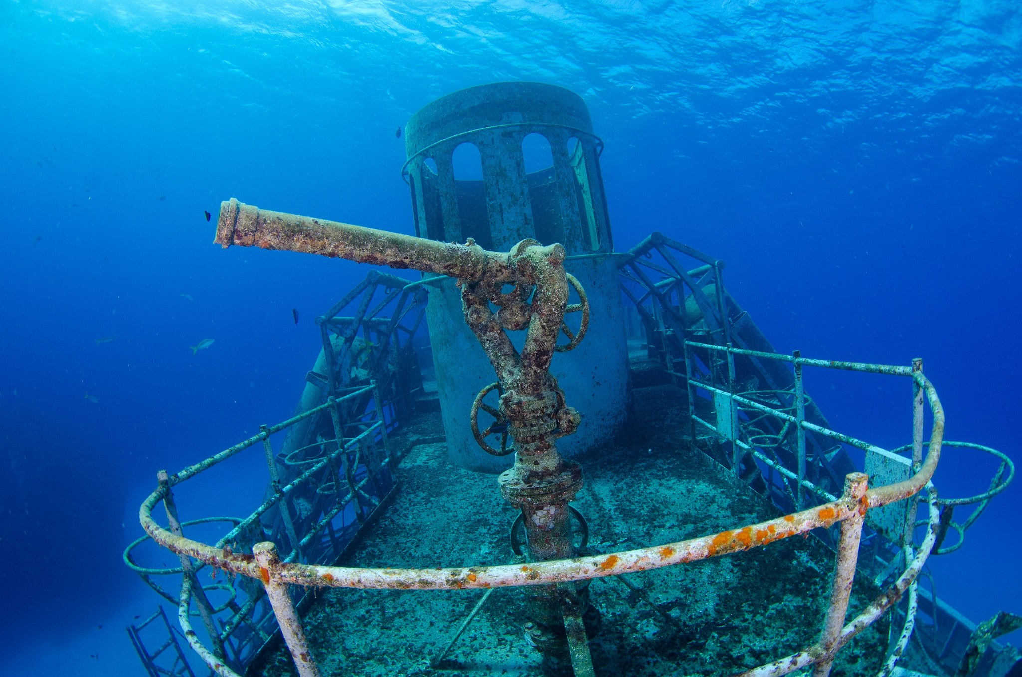 Photo Credit: Ocean Frontiers Diving Adventures