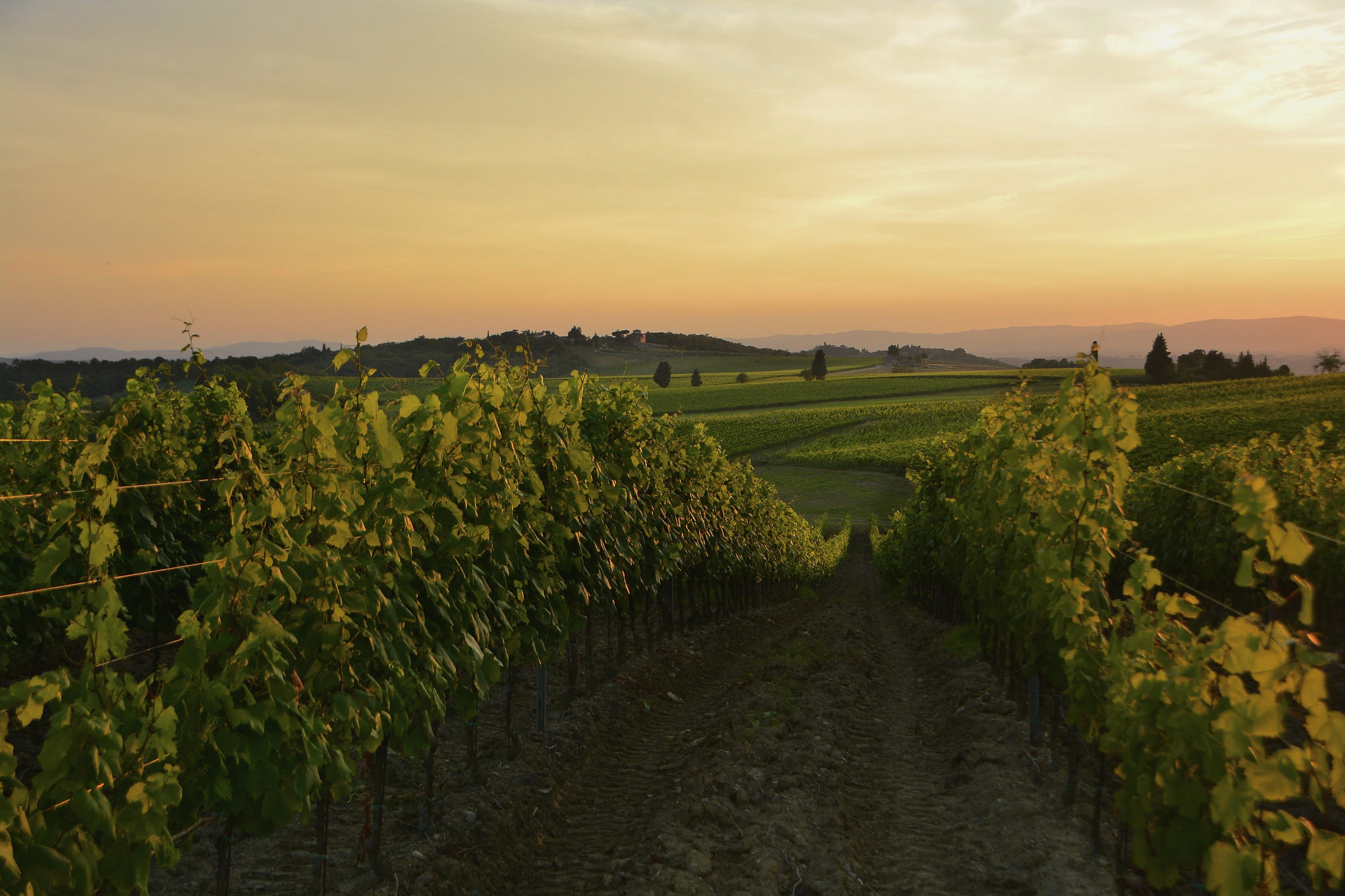 """Sunset in Chianti"" by Antonio Cinotti via Flickr Creative Commons"