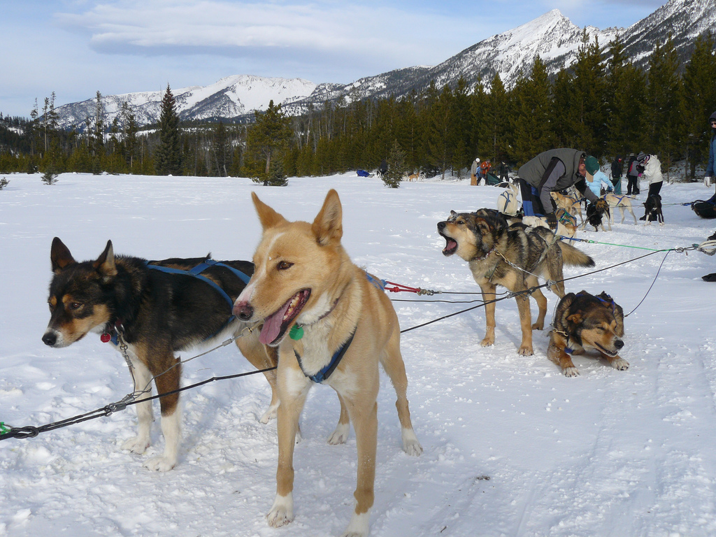 """""""Dog Sledding"""" by Paolo G via Flickr Creative Commons"""
