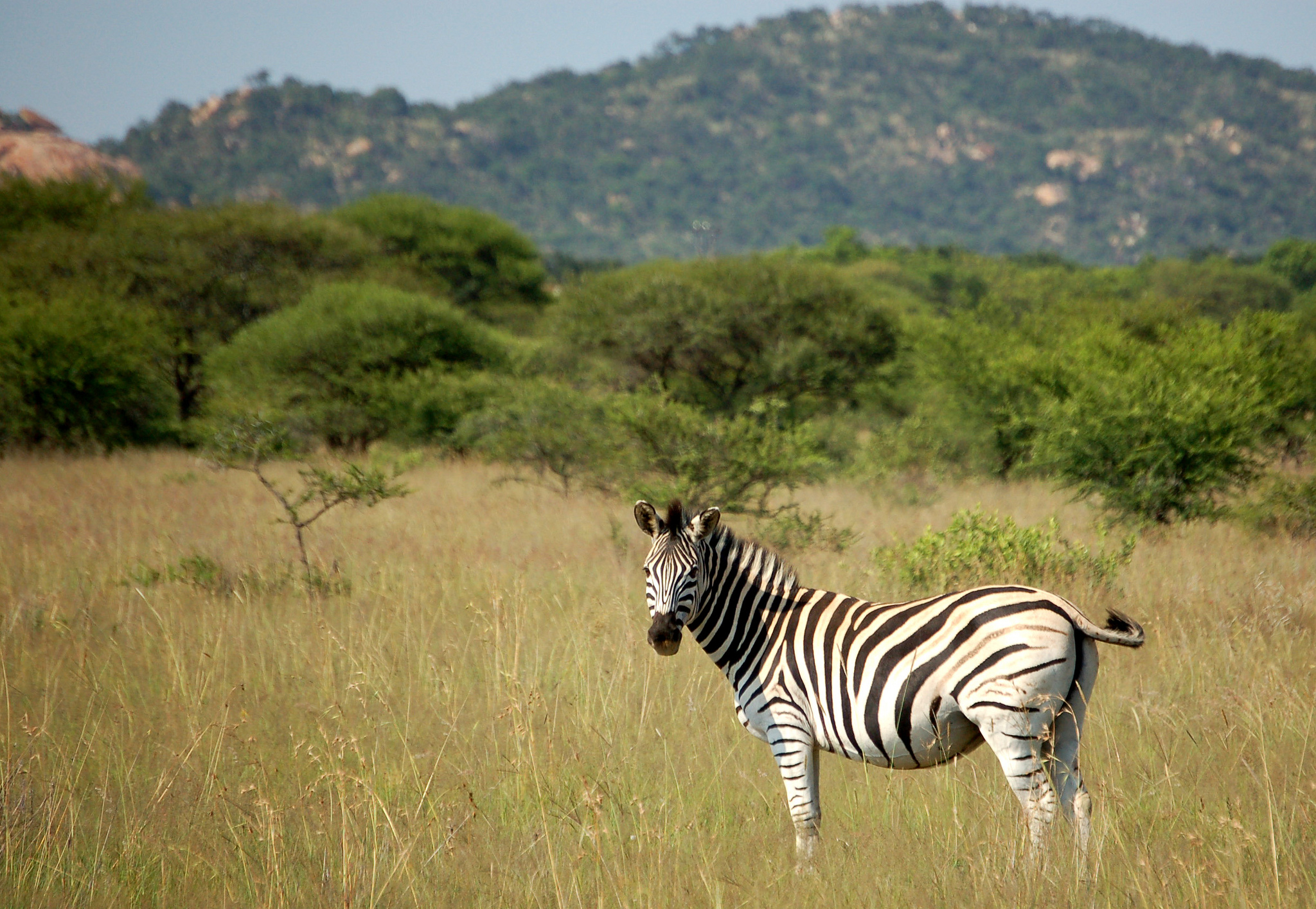 """Polokwane Game Reserve, South Africa, 2013"" by Matt Artz via Flickr Creative Commons"
