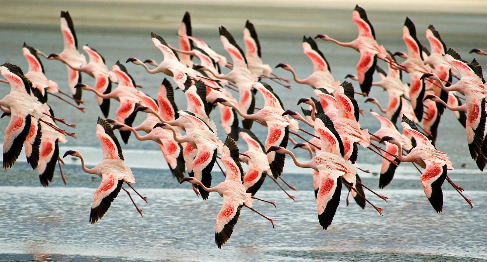 Birdwatching Vacations