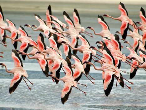 Birdwatching flamingo in ngorongoro crater tanzania