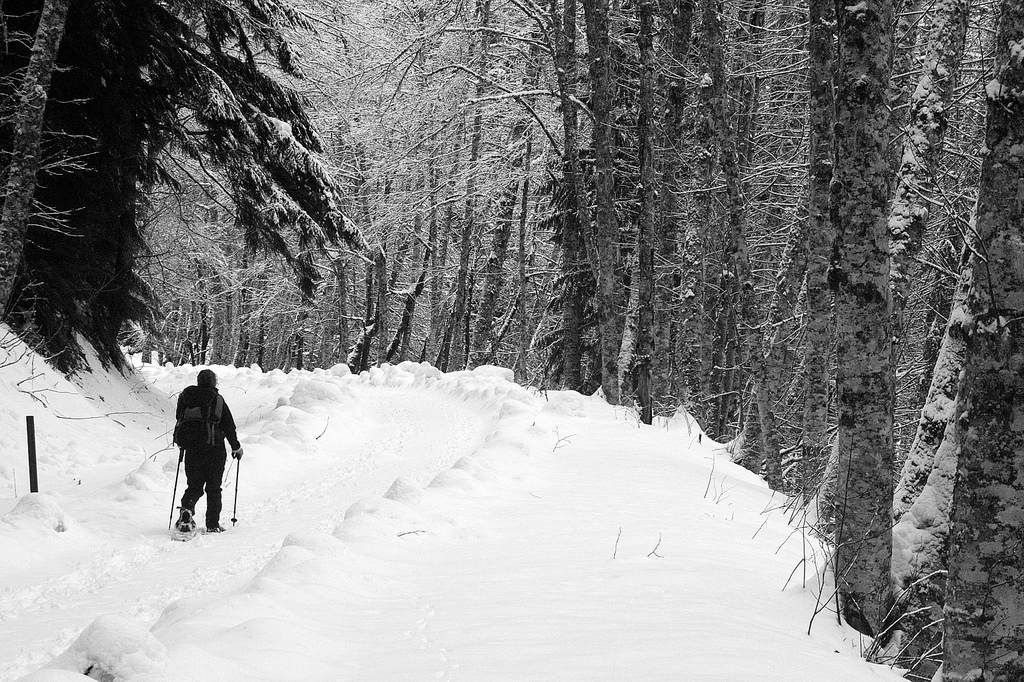 """""""Snowshoe Hike at Mt. Rainier"""" by Troy Mason via Flickr Creative Commons"""