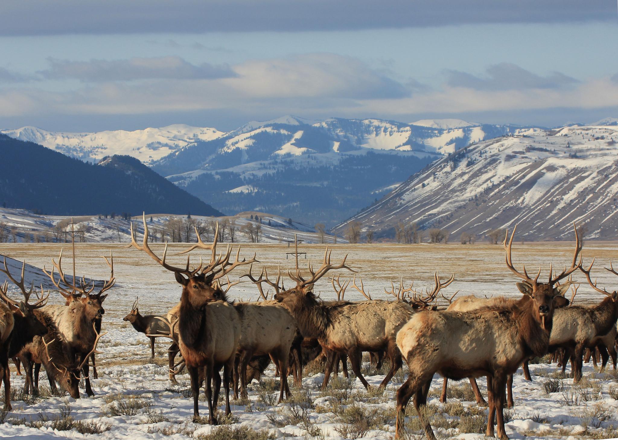 Photo Credit: USFWS Mountain-Prairie
