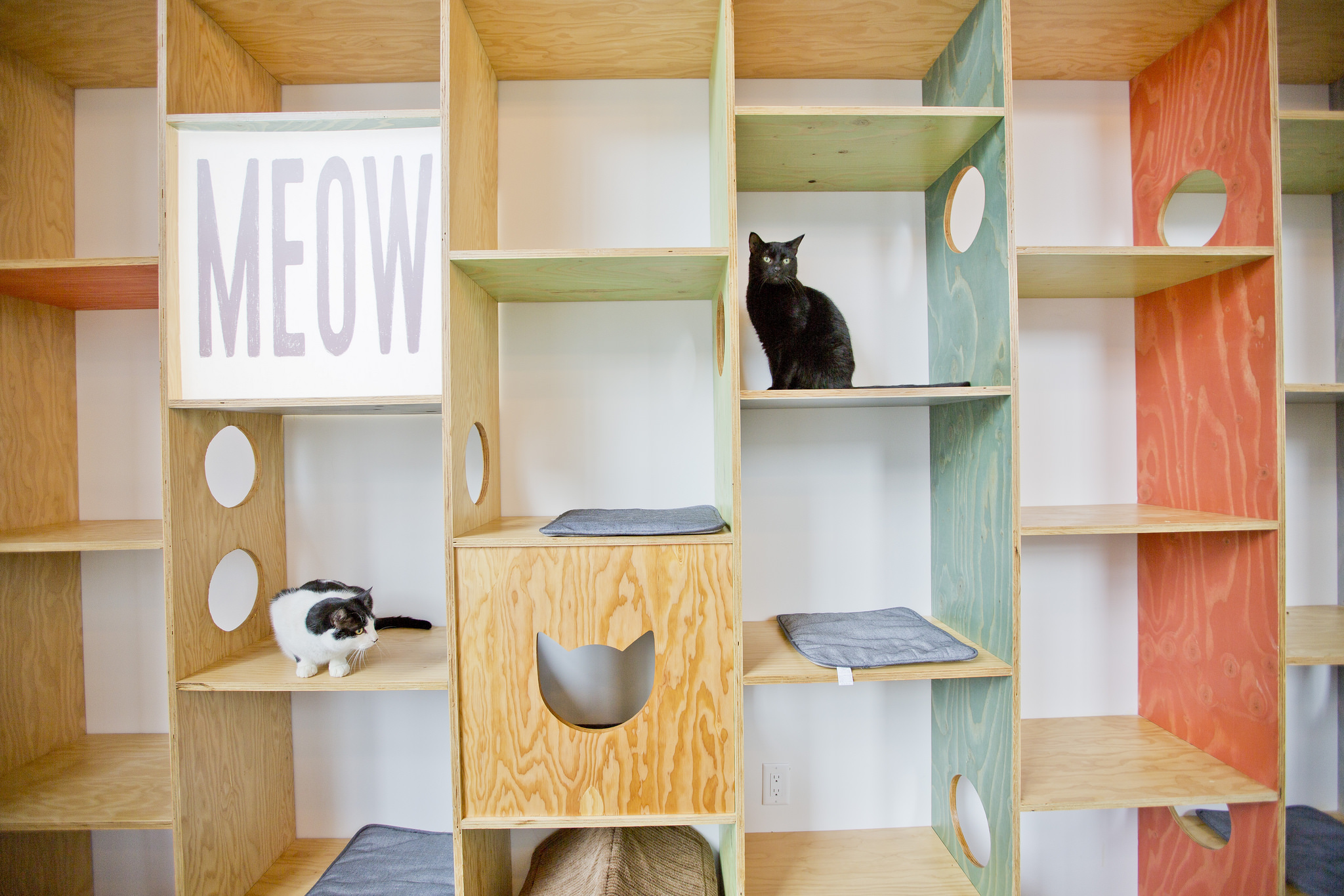 Cats have plenty of nooks and crannies to hide in at Vancouver's Catfe. Photo Credit: GoToVan via Flickr