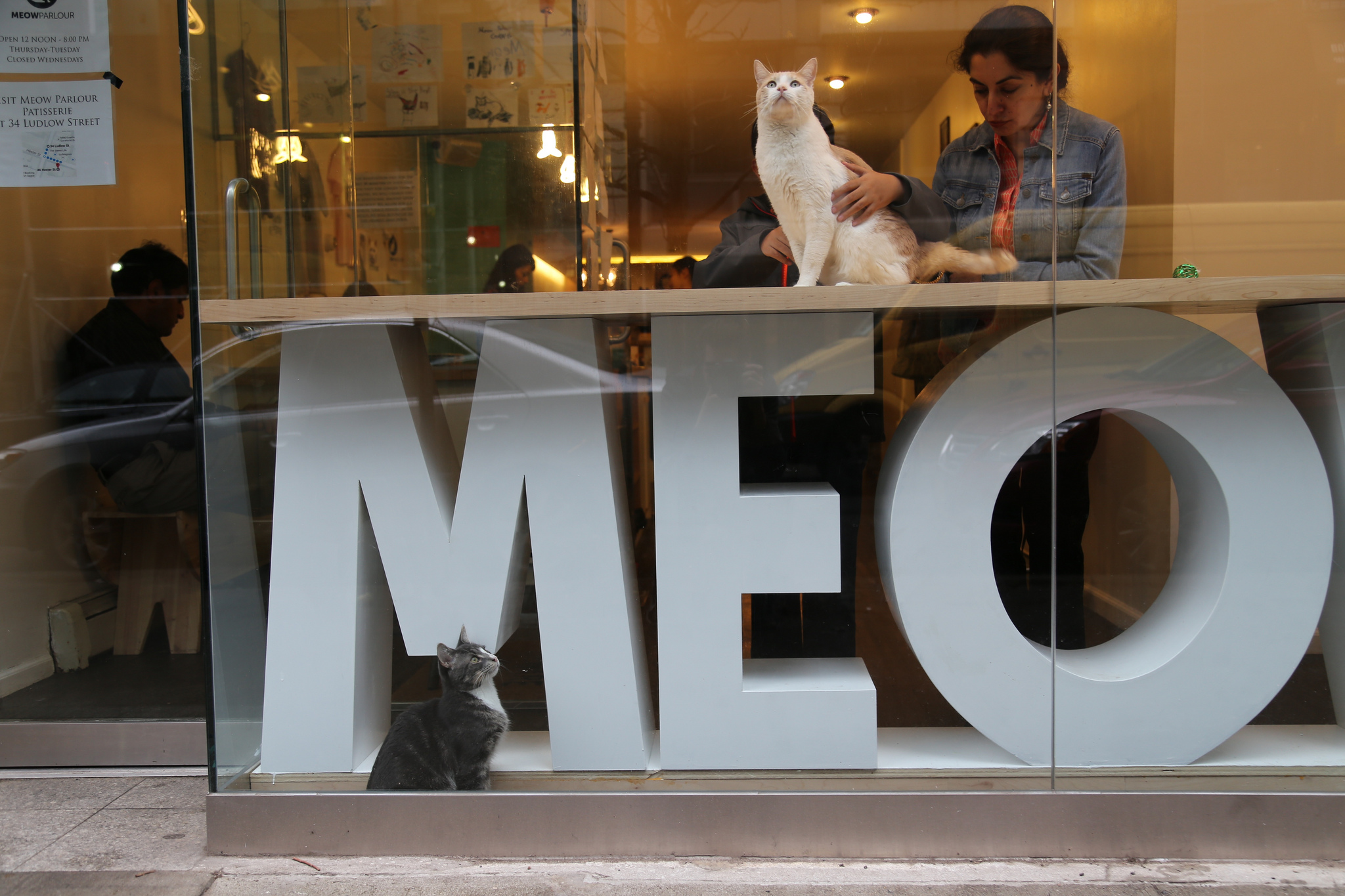 Try cat yoga at Meow Parlour in New York City. Photo Credit: Nuno Cardoso via Flickr
