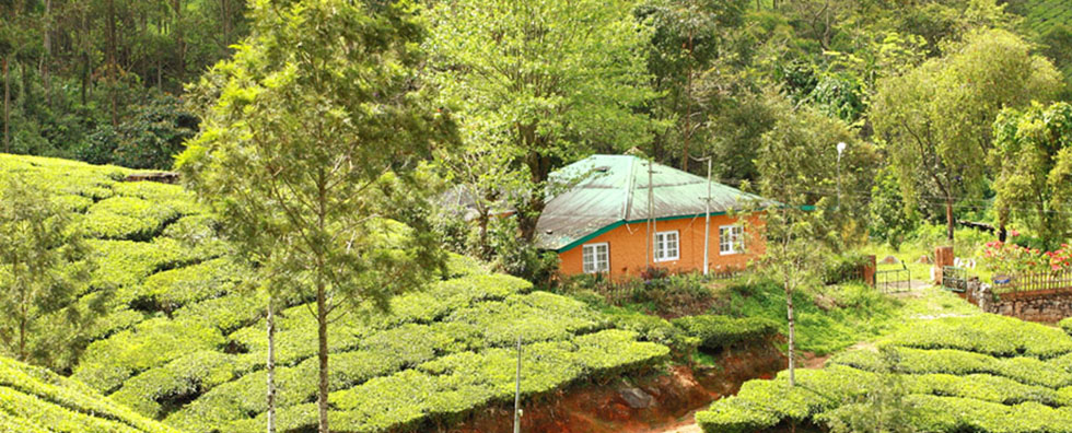 Photo Credit: bluemangoretreats.com