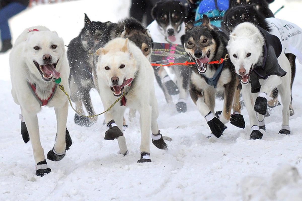 Photo Credit: Arctic Warrior