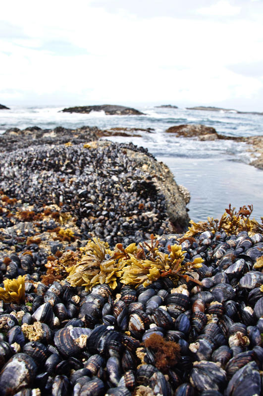 """"""" Mussels"""" by Colin Knowles via Flickr Creative Commons"""