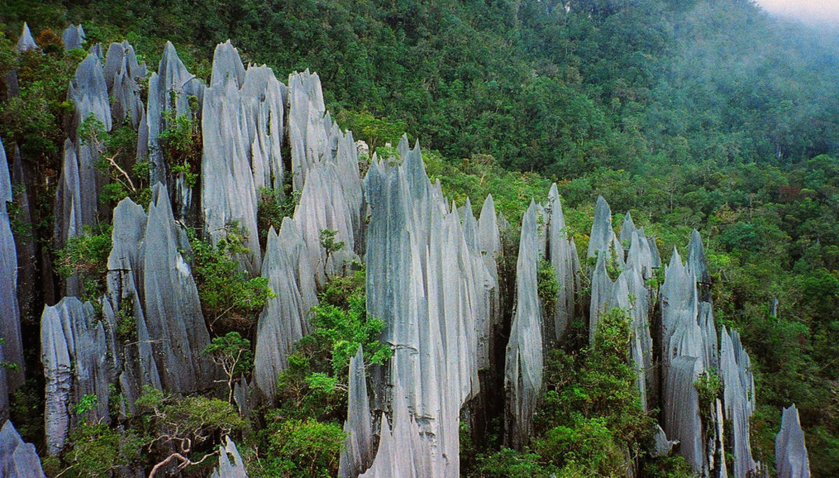 The jagged pinnacls at Gunung Mulu are a threatening sight. Photo Credit: Paul White via Flickr