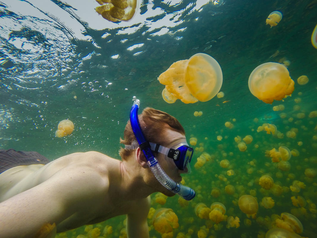 Swim among thousands of harmless jellyfish in Palau. Photo Credit: Richard Schneider via Flickr
