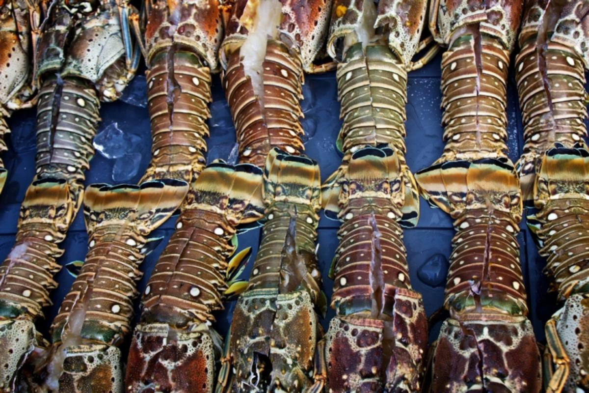 """Jolly Rogers Lobster Tails"" by Mike Rowe via Flickr Creative Commons"