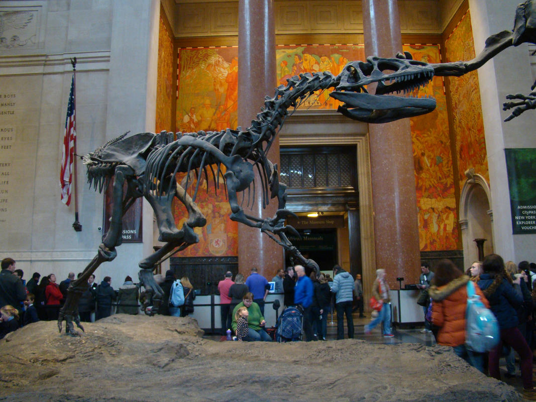 """""""American Museum of Natural History"""" by Rach via Flickr Creative Commons"""