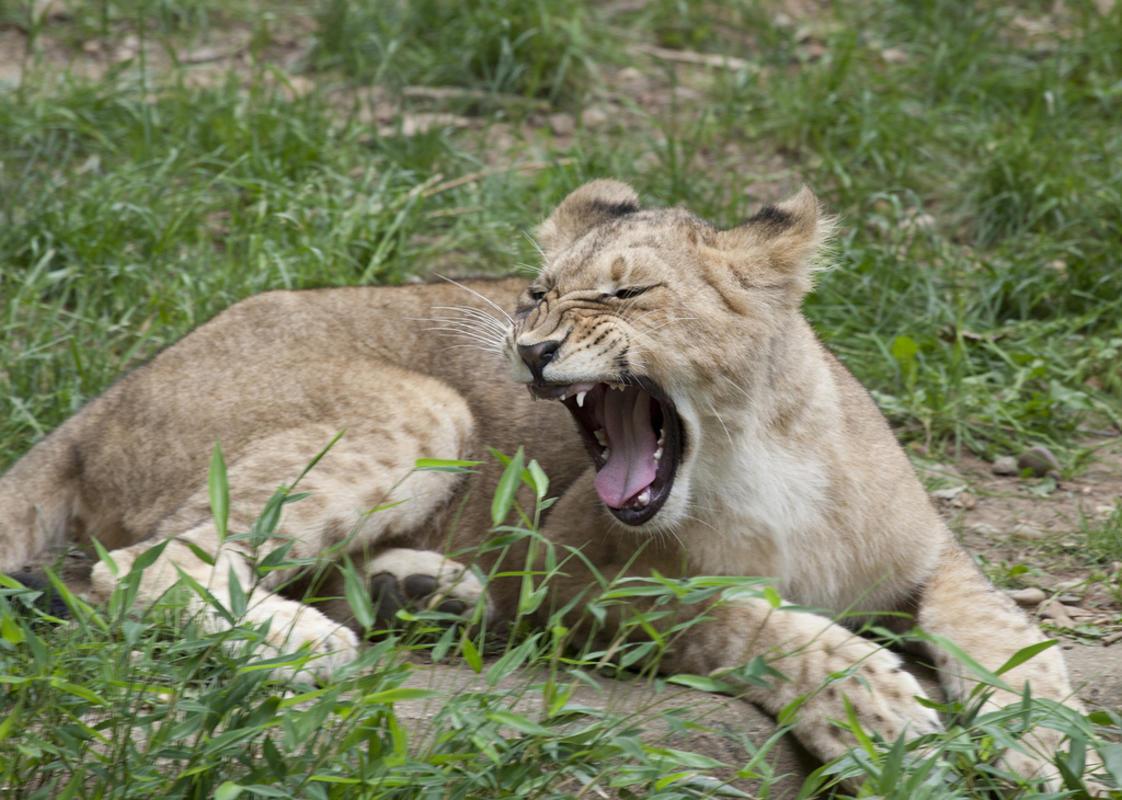 Photo Credit: Smithsonian's National Zoo via Flickr.com
