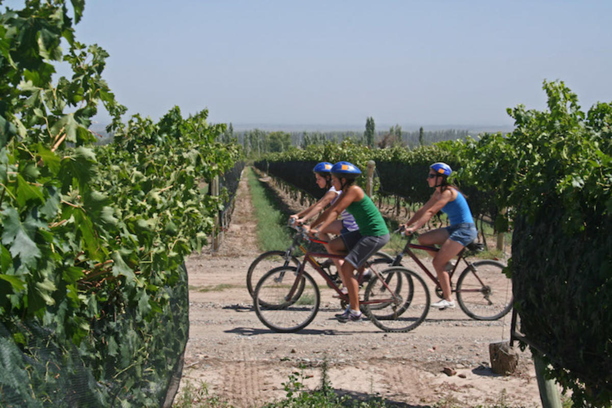 """Cycling through Vineyards in Mendoza, Argentina"" by Turismo Baquia via Wikipedia"