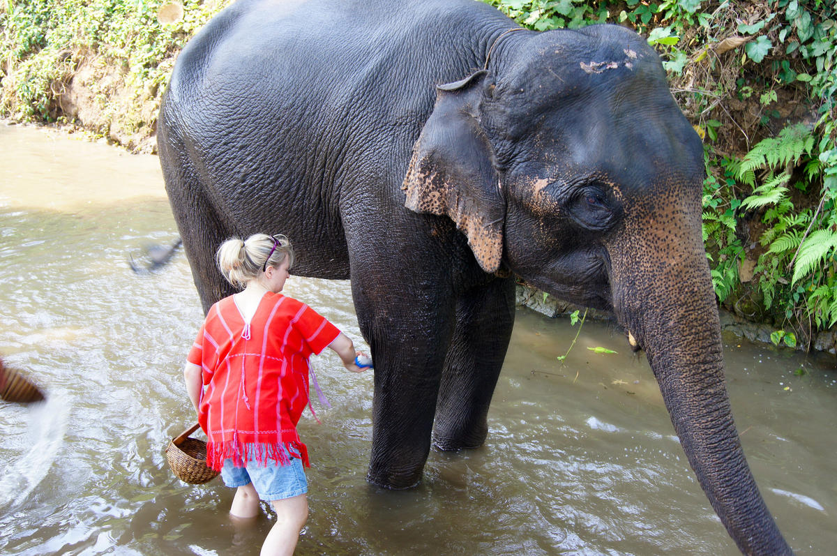 """Patara Elephant Sanctuary, Chiang Mai 2012"" by Evo Flash via Flickr Creative Commons"
