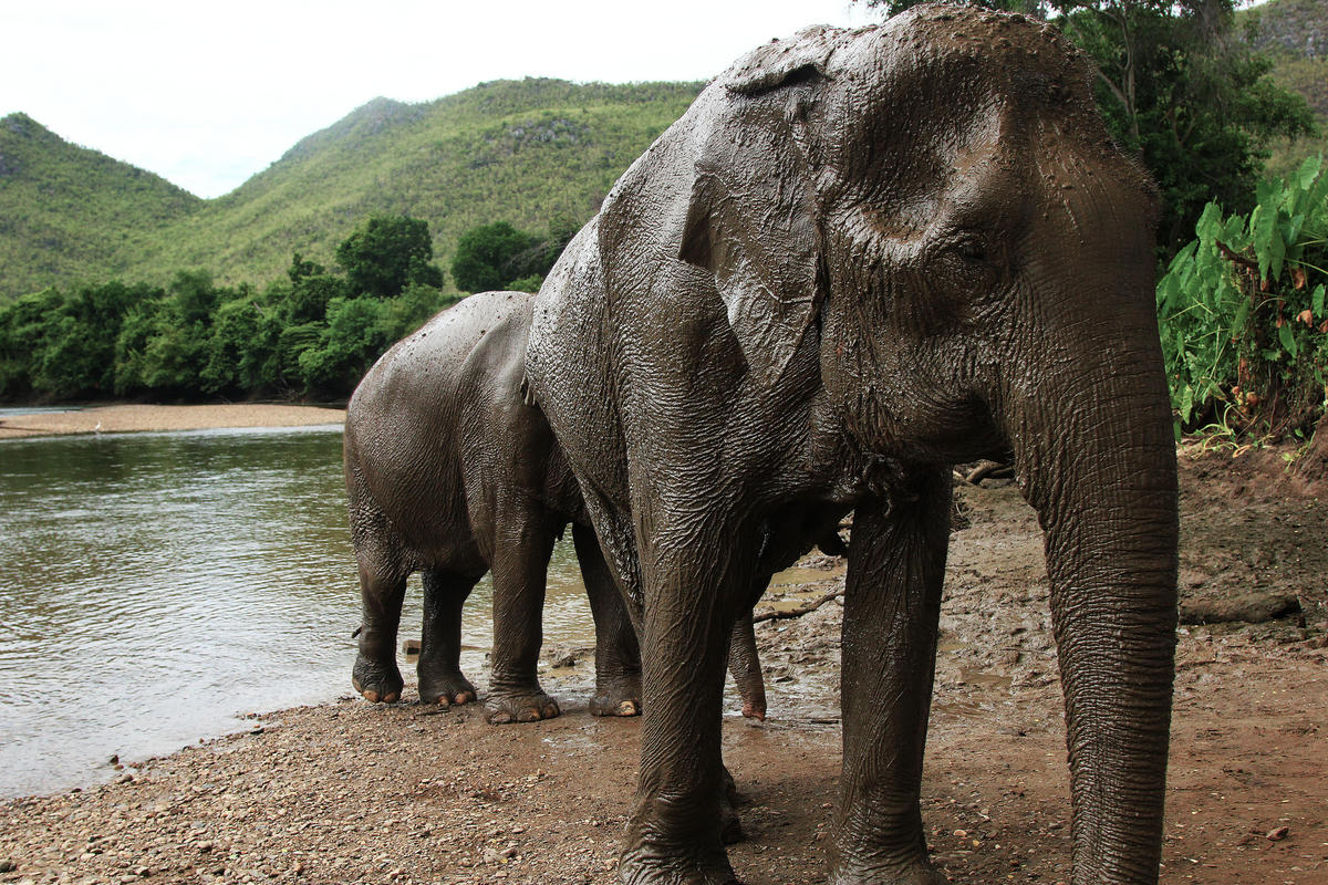 """Elephant's Sunscreen - Thailand - July 2012"" by Matt Martin via Flickr Creative Commons"