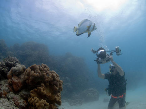 Game  camera  and fish  great barrire reef   cairns  queensland  australia