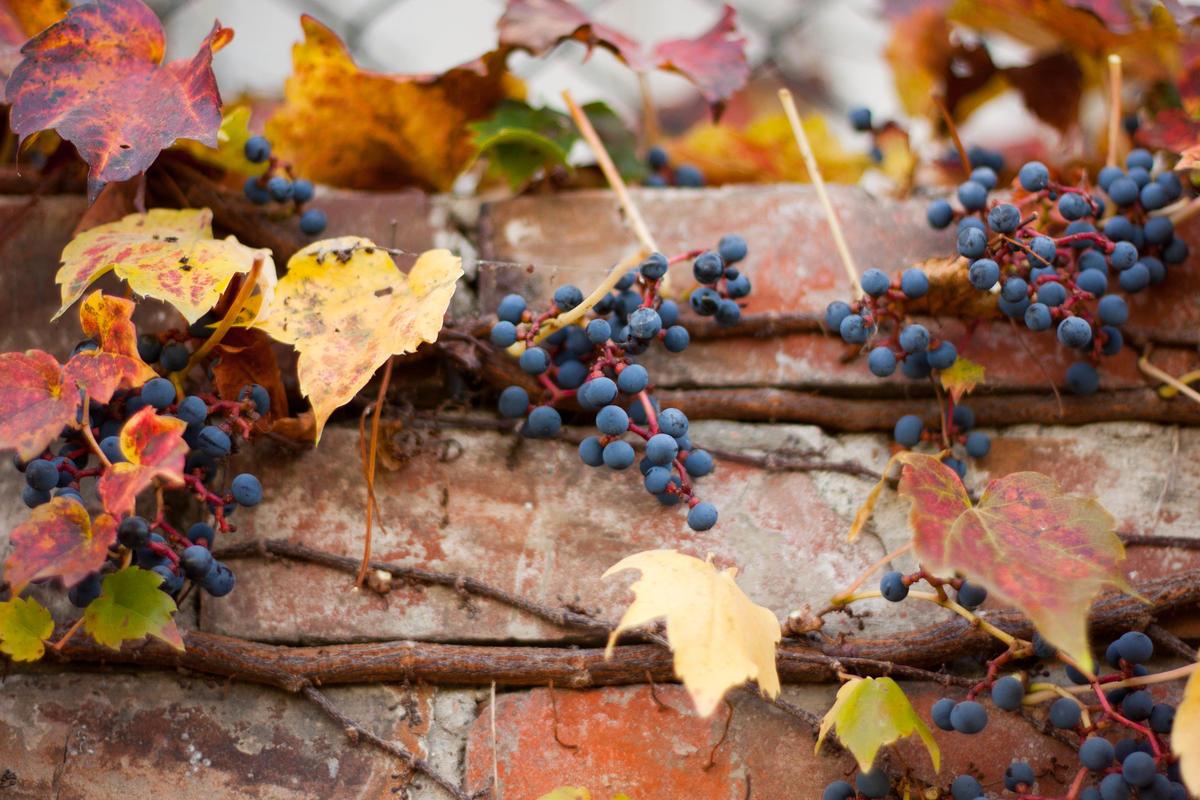 Hermann Wine