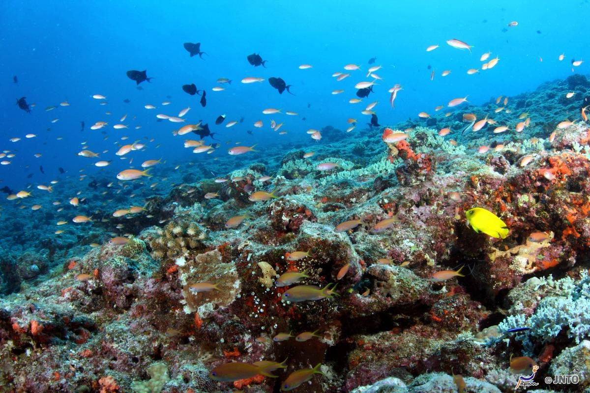 Photo Credit: Klaus Stiefel & Piranha Divers Okinawa / JNTO